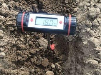 bodemtemperatuur mais